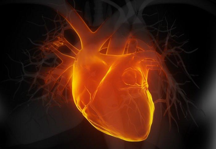 Heart disease gene