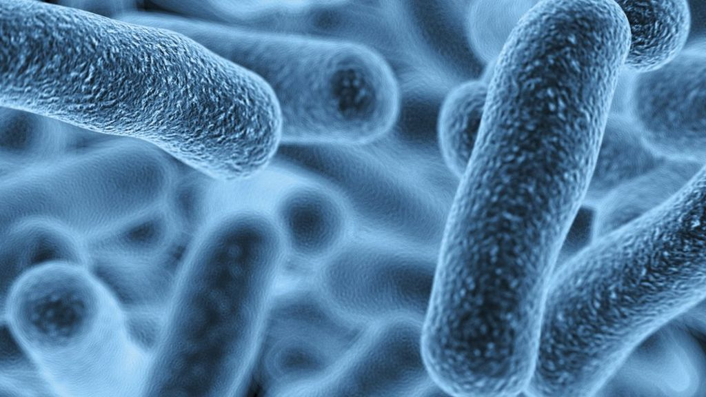 Competing Bacteria